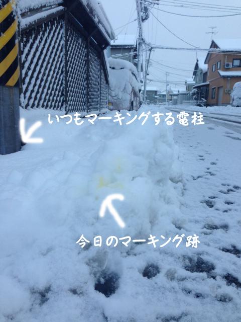 yuki1_1.jpg
