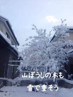 yuki4_4.jpg
